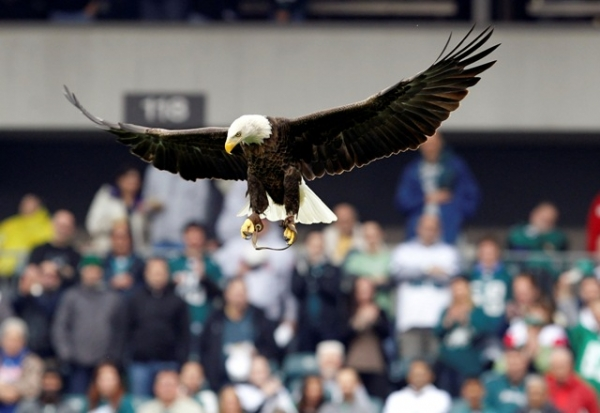 bald-eagle-crashes-into-the-window-of-an-on-campus-chapel-at-oral-roberts-university