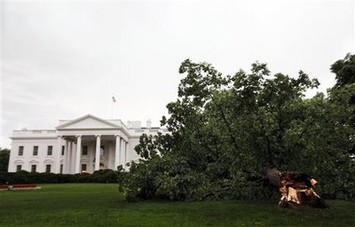 America's Fall, the Last Eight Years: A Parable in Pictures Linden-tree-in-front-of-white-house